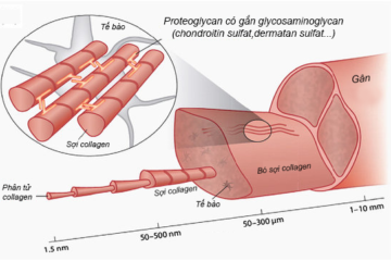 a-hierarchical-structure-of-tendon-spanning-from-the-single-collagen-moleup-to
